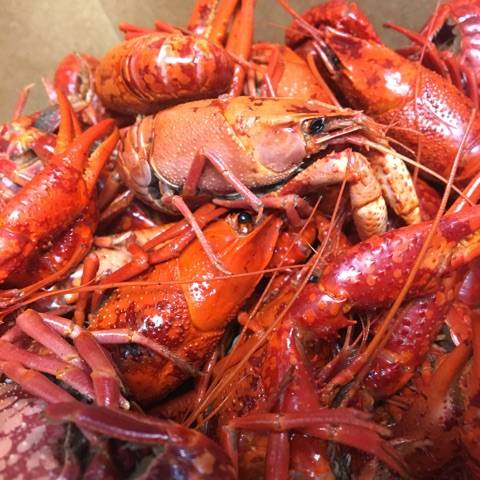 The Crab Stop | restaurant | 1405 Sulphur Spring Rd, Arbutus, MD 21227, USA | 4102421394 OR +1 410-242-1394