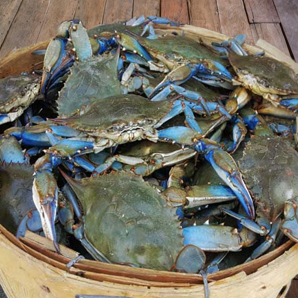 Rashads Crabhouse | restaurant | 650 Ames Pl, Williamsport, PA 17701, USA | 5704780544 OR +1 570-478-0544