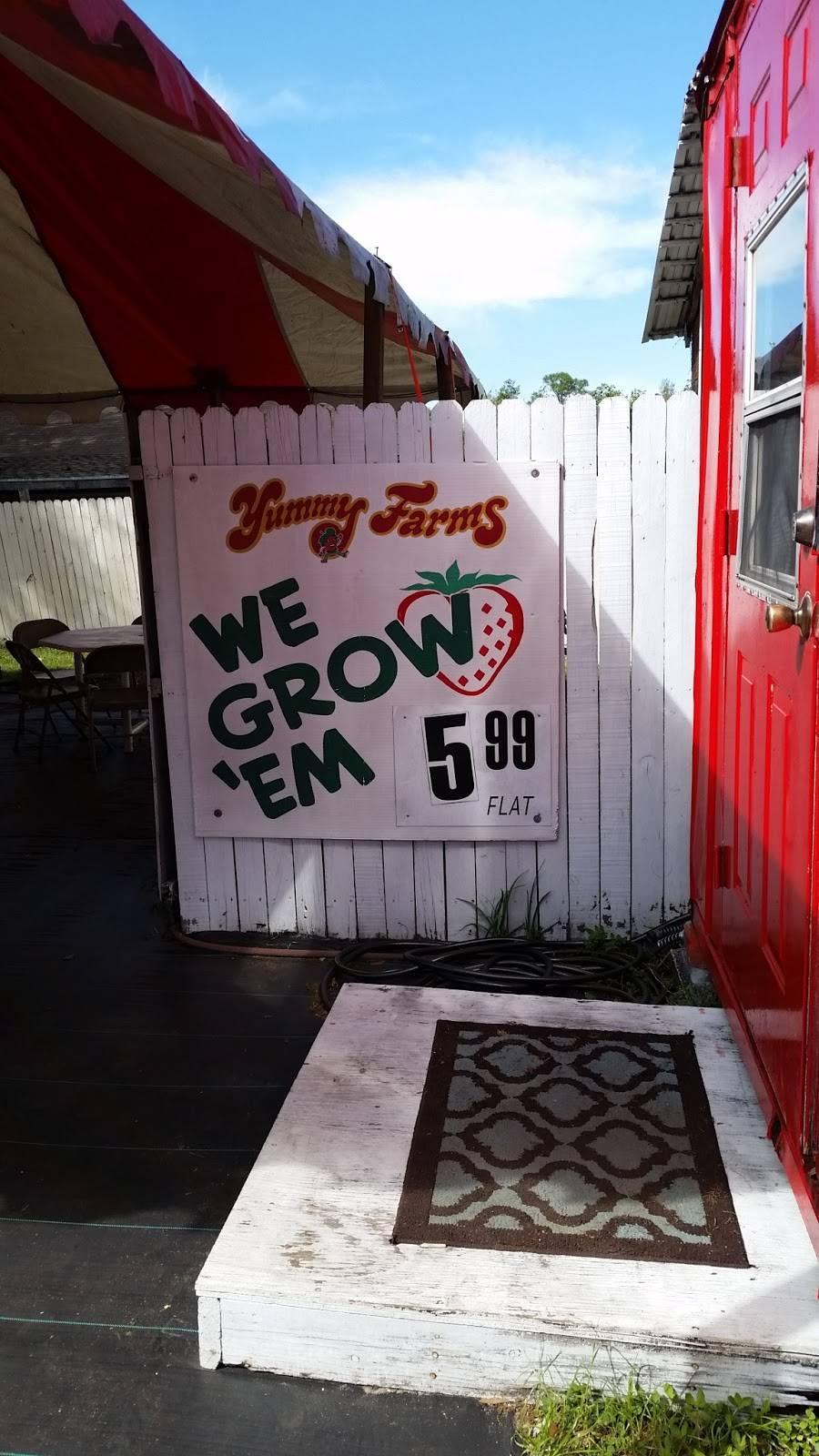Yummy Farms   restaurant   Plant City, FL 33563, USA