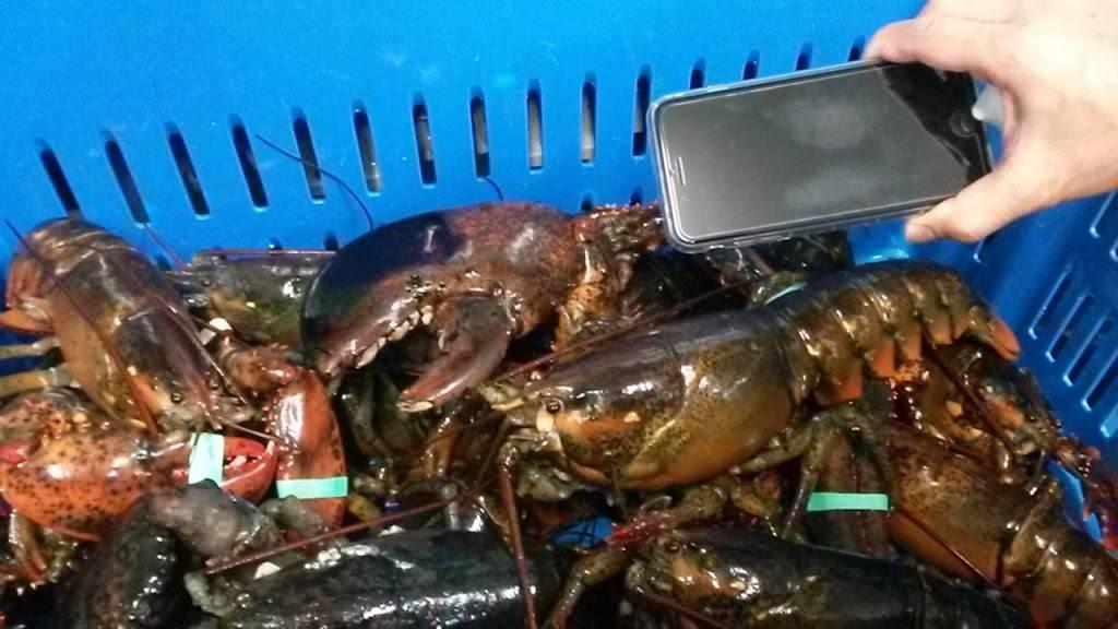 Goffs Seafood Inc | restaurant | 120 W Merion Ave, Pleasantville, NJ 08232, USA | 6096413345 OR +1 609-641-3345